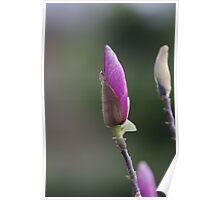 Magnolia Spear Poster