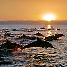 Long-beaked Common Dolphins at Sunset by Michael S Nolan