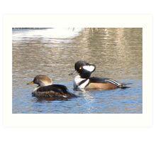 Hooded Merganser Ducks-Mates Art Print