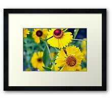 Yellow Wild Flowers Framed Print