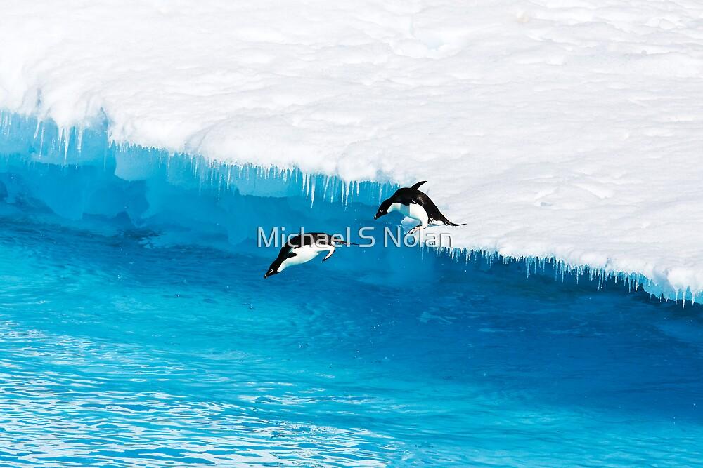 Adelie Penguin  Leap of Faith by Michael S Nolan