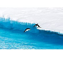 Adelie Penguin  Leap of Faith Photographic Print