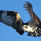 In flight!! by jozi1