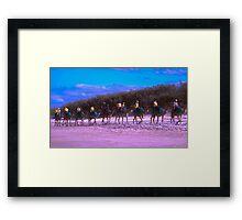 Camels on Northshore, QLD Framed Print