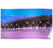 Camels on Northshore, QLD Poster