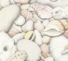 Shells and Pebbles by Fiona Cross