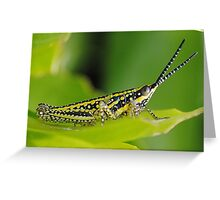 From the insect world Greeting Card