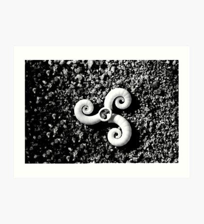 Black and White Sea Snais Art Print