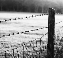 Barbwire Fence by Emily Peak