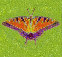 BUTTERFLY BRINGS LUCK by Jean Gregory  Evans