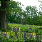 Lupine Maple Colors by Wayne King