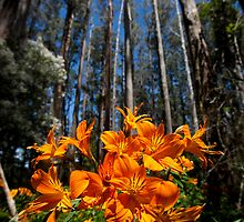 Orange spring by Anthony Milnes