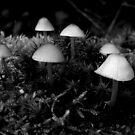 Magic Mushroom by ienemien