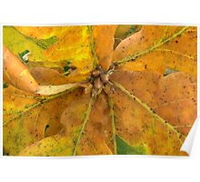 autumn oak leaves Poster