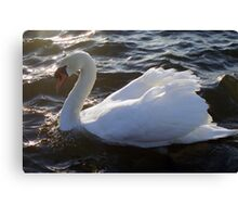 Swan of Llanfairfechan Canvas Print