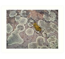 Lichens on Montana Granite Art Print