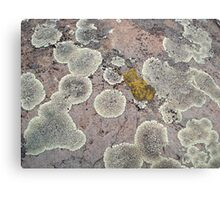 Lichens on Montana Granite Metal Print