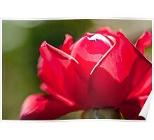 Rose Filter Poster