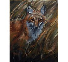 Red in the Reeds - Red Fox Photographic Print