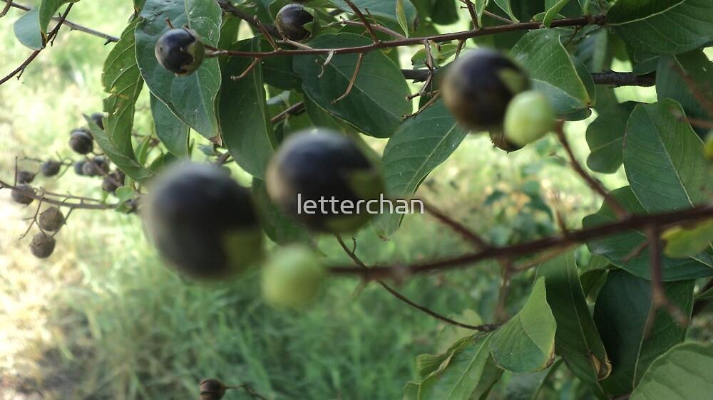 berries by Loretta Marvin