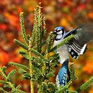 Autumn Forager by Bill McMullen