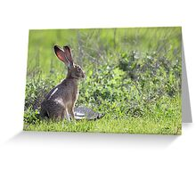 Tortoise and the Hare Greeting Card