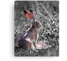 Tortoise and the Hare desaturated Canvas Print