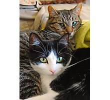 My Cats Penny and Baby Photographic Print