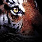 Eye of the Tiger 2 by Wingsdomain Art and Photography
