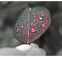 Red drops on leaf Photographic Print