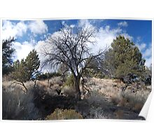 Tree, Lava Beds National Monument Poster