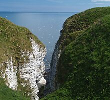 Bempton Cliffs by WatscapePhoto