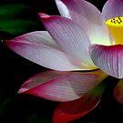 A flower in Buddha's hand   by Brian Bo Mei