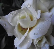 Water Drops by Becccaa