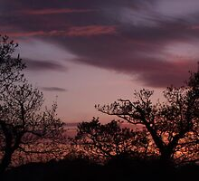 Coloured Sky And Trees by Becccaa