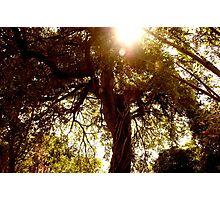 Floridian Jungle  Photographic Print