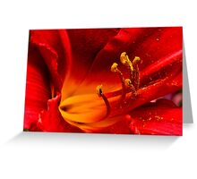 Fiery Lily Greeting Card