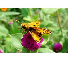 Tiny Yellow and Tan Butterfly Photographic Print