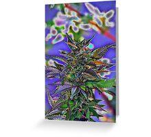 MEDICINAL CANNIBAS Greeting Card
