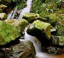 Rainforest Falls by Paul Earl