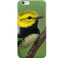Black-throated Green Warbler iPhone Case/Skin