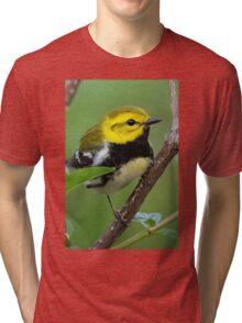 Black-throated Green Warbler Tri-blend T-Shirt