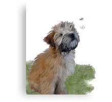 Soft coated wheaten terrier puppy & butterfly Canvas Print