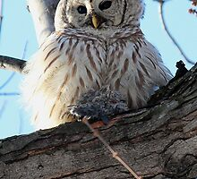 Adorable Barred Owl With Prey by hummingbirds