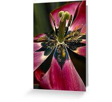 Tulip feast Greeting Card