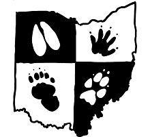 Ohio Furs (Black Logo) Photographic Print
