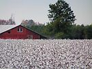 High Cotton by Marriet