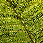 Native Fern by Belinda Osgood