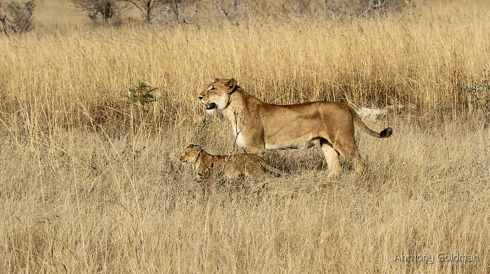 Learning the bush from mom! by jozi1