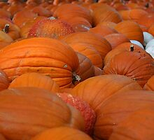 Pumkin Patch by RebeccaBlackman